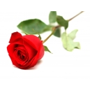 Send Valentine's Day Roses to Bangladesh