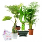 send gift live plant to dhaka