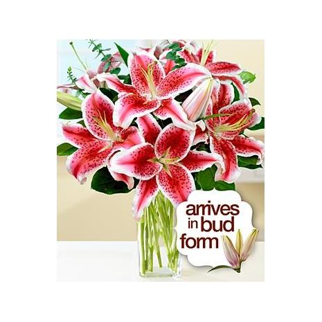 Send Fragrant Stargazer Lilies to Dhaka in Bangladesh