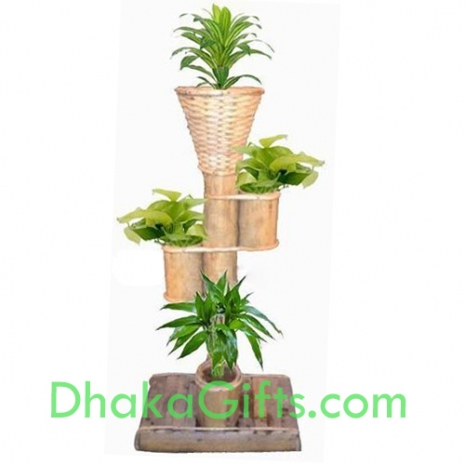 bamboo stand with live plants send to dhaka